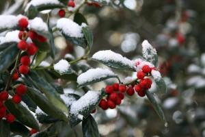 December-Snow-300x200